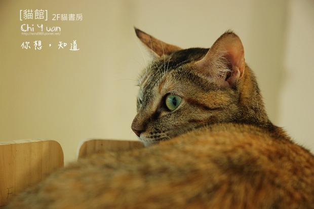 貓書房微笑03.jpg