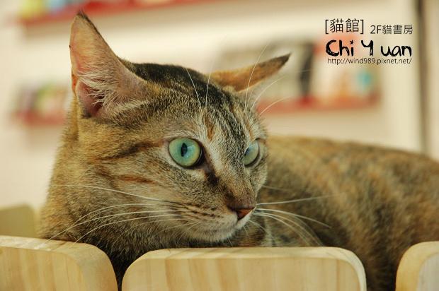貓書房微笑04.jpg