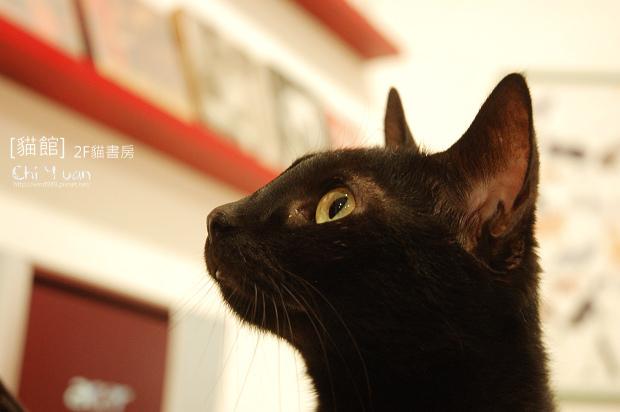 貓館黑咪01.jpg
