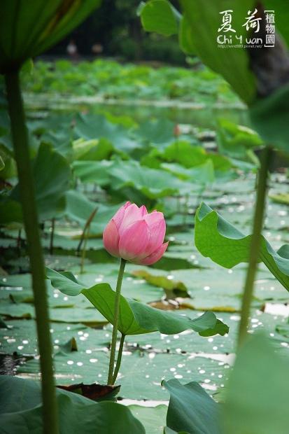 台北植物園01.jpg