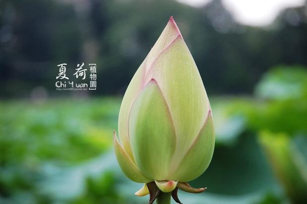 台北植物園05.jpg