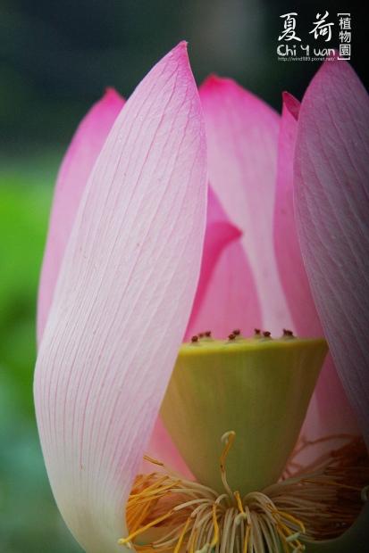 台北植物園08.jpg