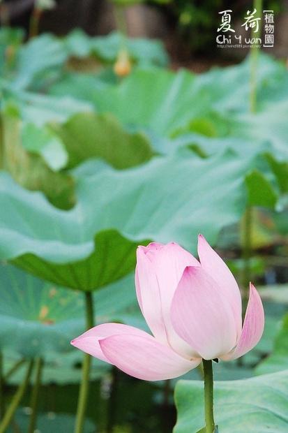 台北植物園10.jpg