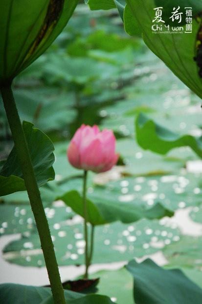 台北植物園12.jpg