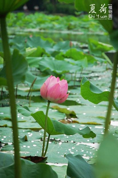 台北植物園13.jpg