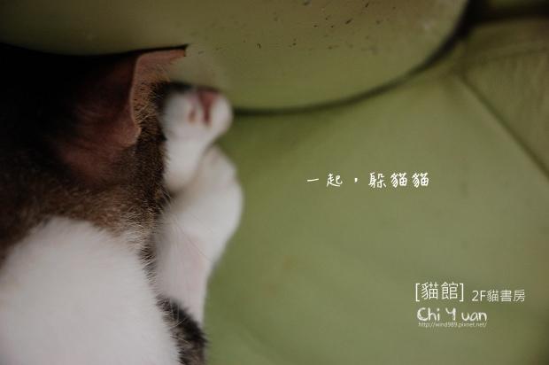 貓書房沙發01.jpg