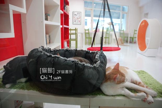貓書房01.jpg