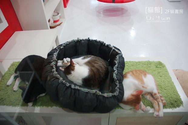 貓書房11.jpg