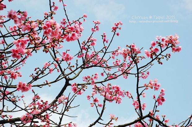 2011陽明山花季11.jpg