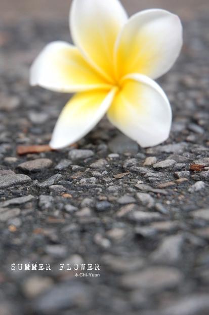 Summer Flower01.JPG