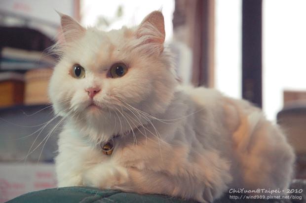 Cat。Home01.JPG