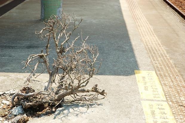 二結火車站05.JPG