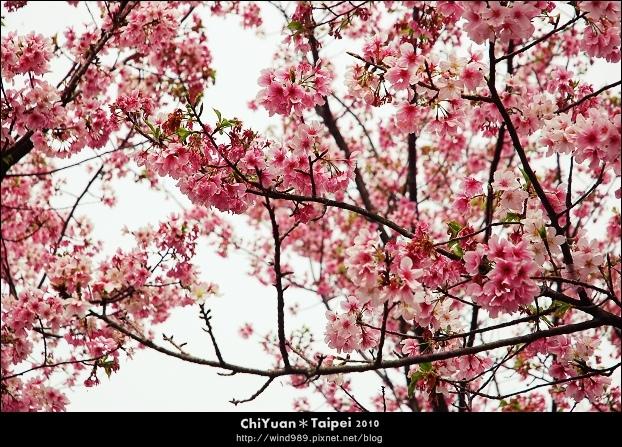 2010陽明山花季06.jpg