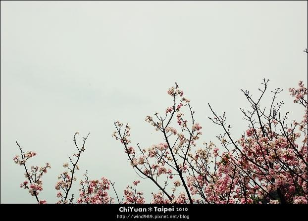 2010陽明山花季09.jpg