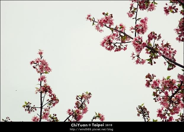 2010陽明山花季10.jpg