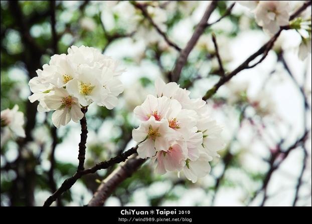 2010陽明山花季16.jpg