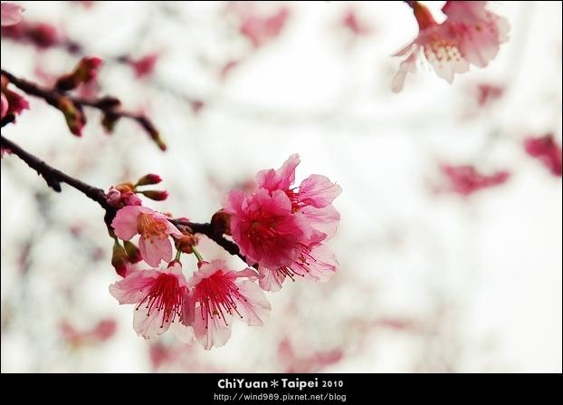 2010陽明山花季18.jpg