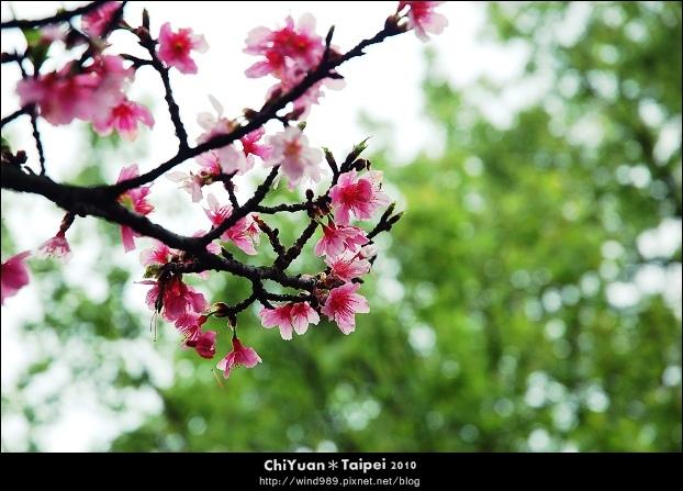 2010陽明山花季19.jpg