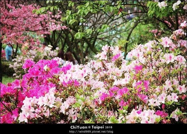 2010陽明山花季21.jpg