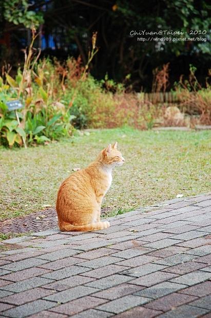 20100126貓腳印(台北植物園)02.jpg