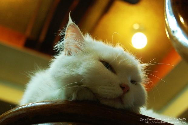 [叮叮]Cat。高處的慵懶.jpg