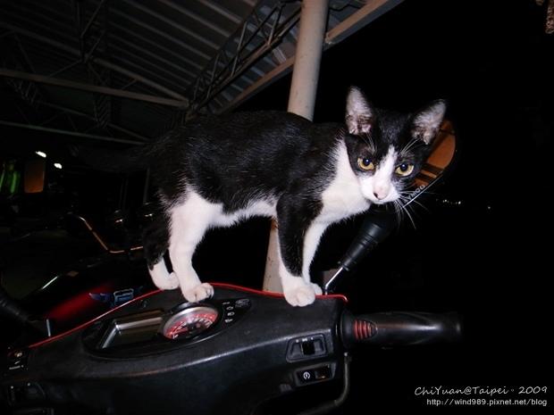 駕駛機車の貓03.jpg