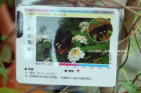 2009陽明山蝴蝶季09.JPG