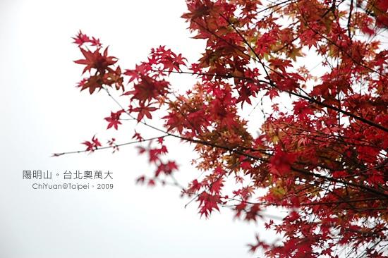 台北奧萬大。楓紅06