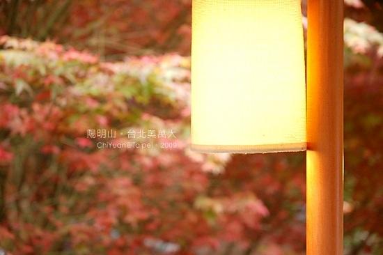 台北奧萬大。楓紅11