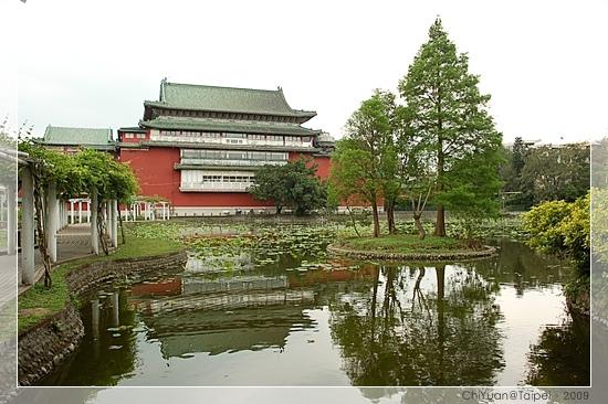 台北植物園。野薔薇01