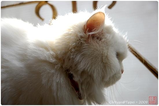 Cat。俯瞰眾生01
