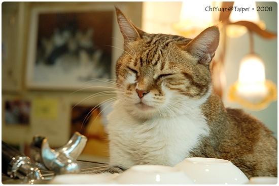 Cat。極簡咖啡