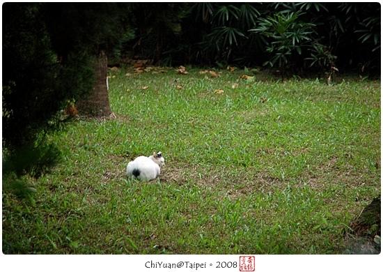 Cat(台北)