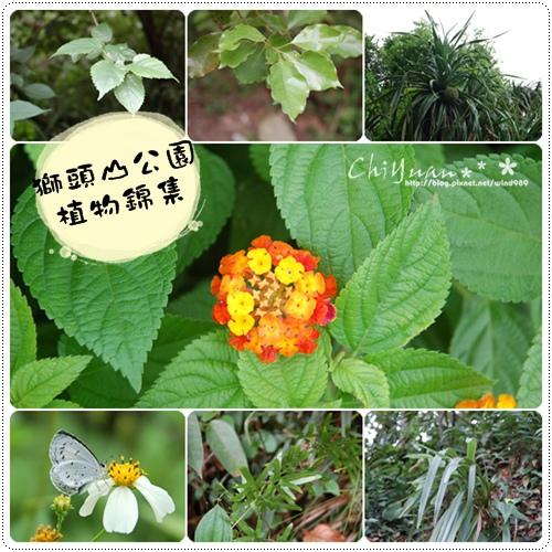 獅頭山公園植物錦集