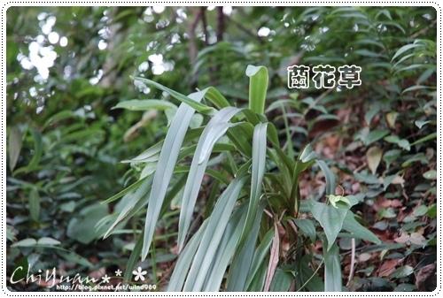 DSC_9378蘭花草