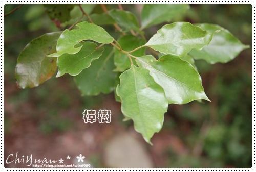 DSC_9383樟樹