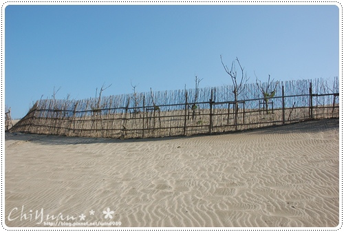 DSC_8716防風林