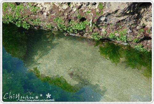 DSC_8719藻礁