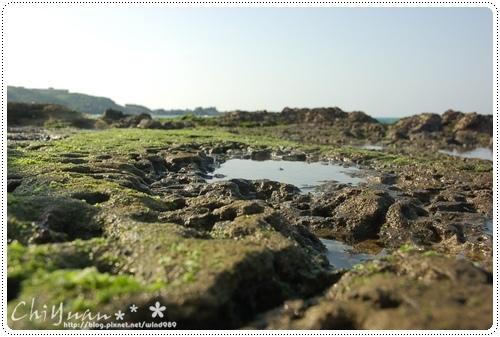 DSC_8724藻礁