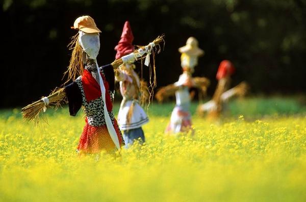稻田裡的稻草人