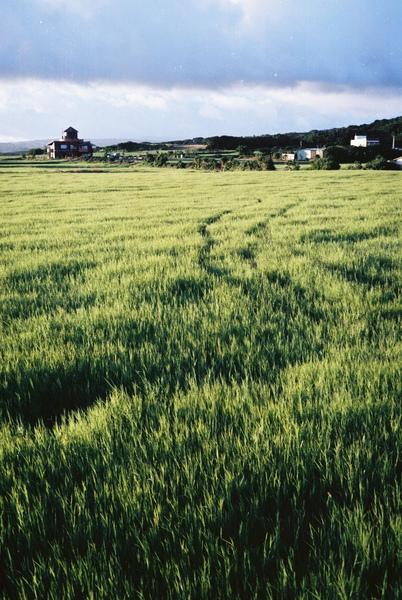 11.往外走一小段,就可以看到一片美麗的草原