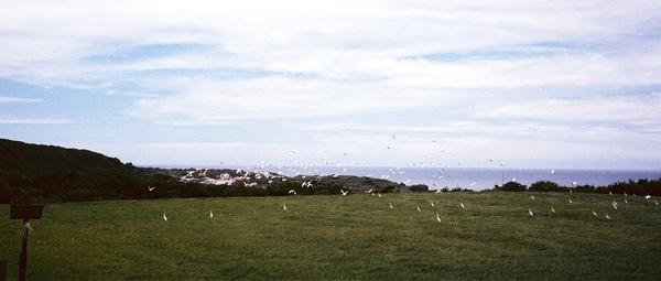 18.第二天一早,外面有滿天的白鷺鷥
