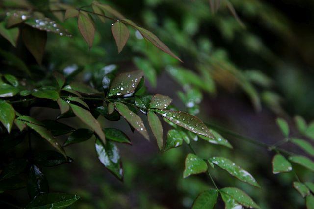 B-雨滴1.jpg