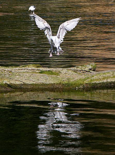 海鷗3.jpg