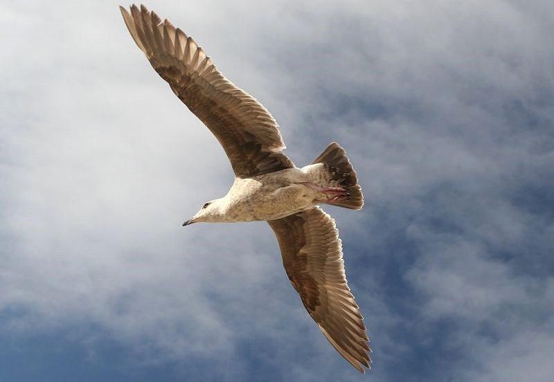 海鷗飛翔 2a
