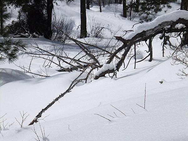 B-雪2.jpg