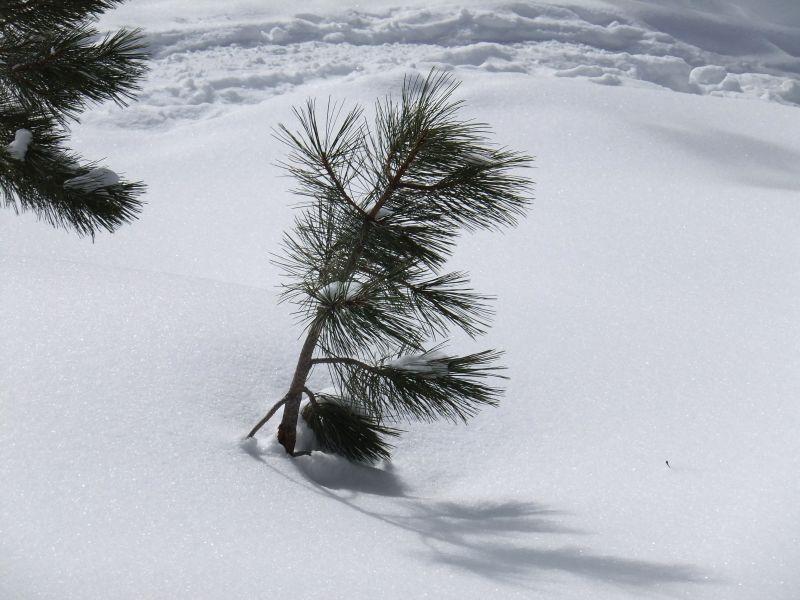 B-雪4.jpg