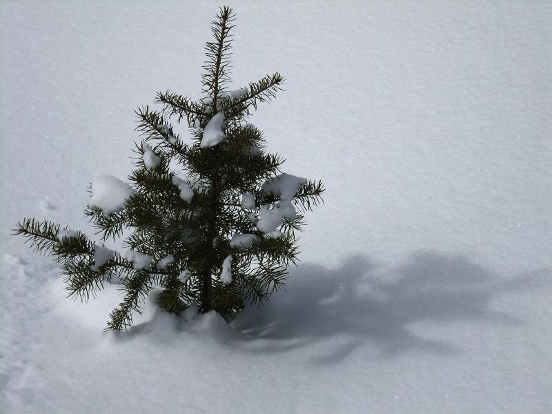 B-雪6.jpg