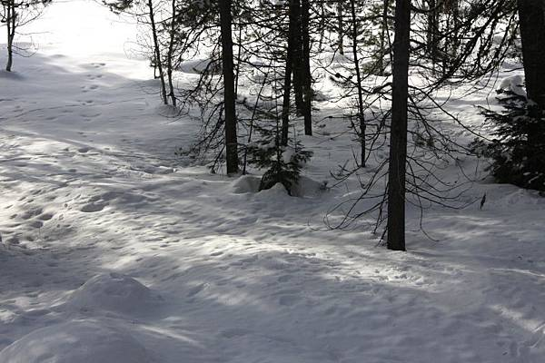 B-雪9.jpg