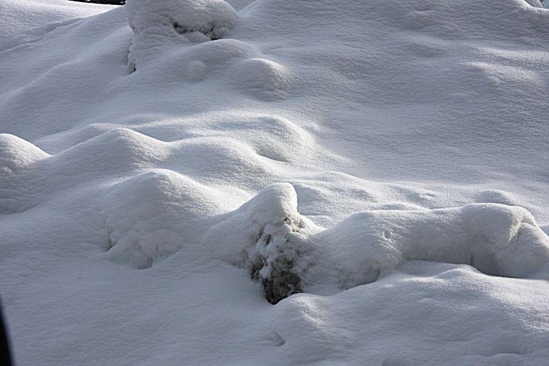 B-雪地3.jpg